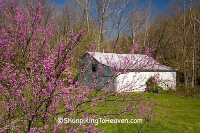 White Barn and Redbud Tree, Morgan County, Ohio
