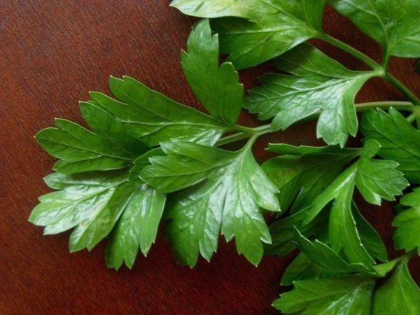 230-plantas-medicinales-mas-efectivas-y-sus-usos-perejil-hojas