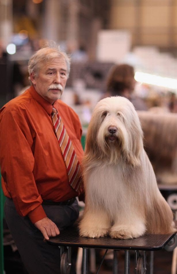 20 Dogs Who Look Exactly Like Their Owners