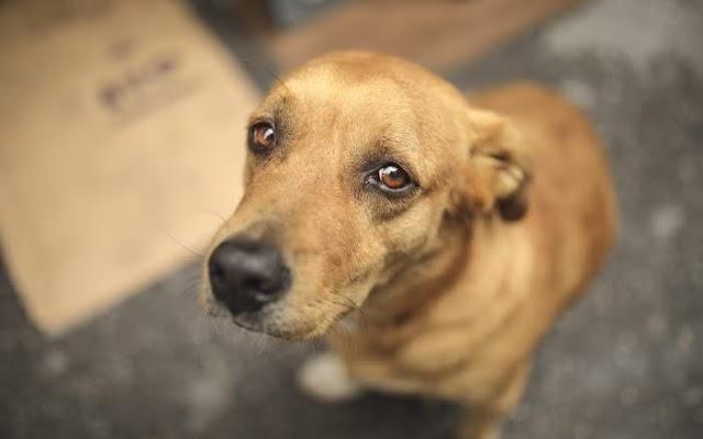 Bolsonaro sanciona lei que aumenta pena a maus-tratos a cães e gatos