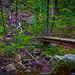 White Oak Run Foot Bridge