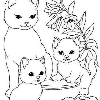 kedi resimleri boyama gazetesujin
