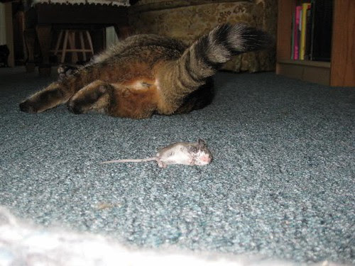 This is the Bum That Belongs to the Cat that Caught the Mouse that Lived in the House That Muffy Rents