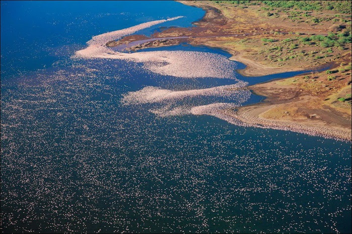 1 Millions of flamingos at Lake Nakuru in Kenya (800x566, 197Kb)