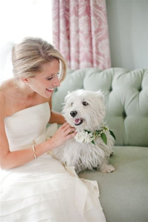 1269 best Wild About Westies images on Pinterest   White