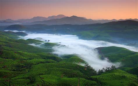 fog  tea fields wallpapers fog  tea fields stock