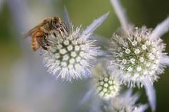 bee-satellites