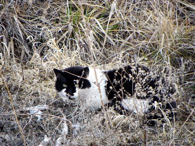 DSCN0809 black and white cat