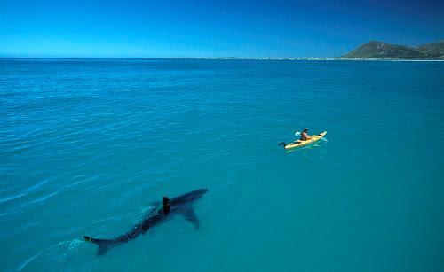 http://www.activistpost.com/wp-content/uploads/2012/05/white-shark-kayak31.jpg