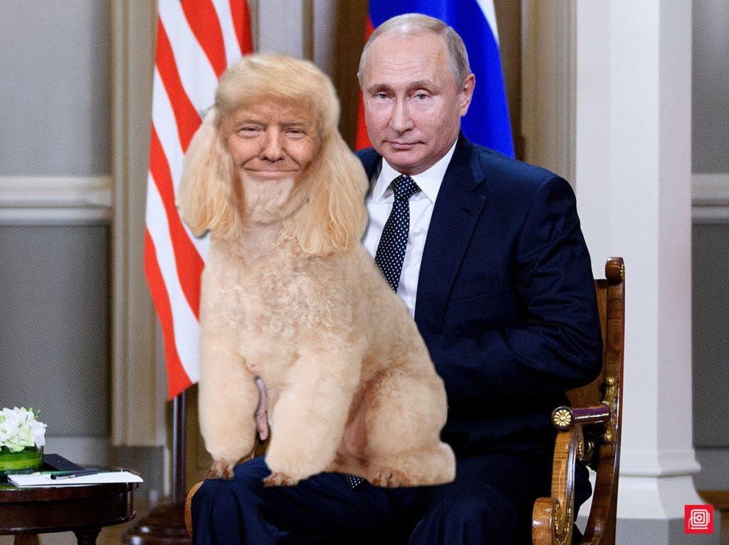 Image result for trump putin's poodle