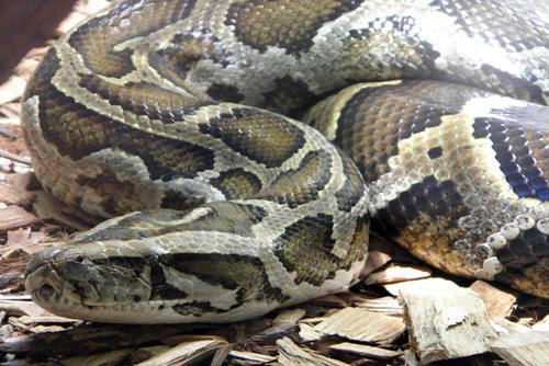snake-photo