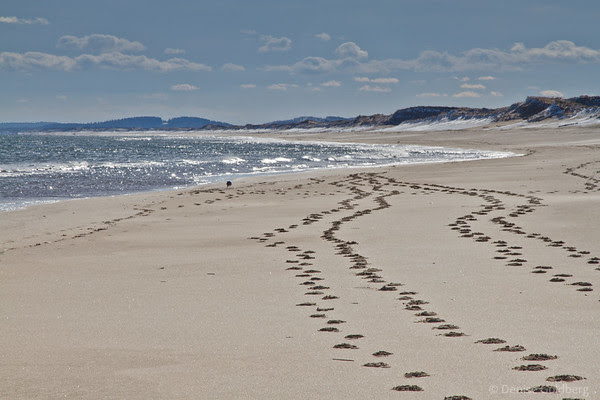 footsteps on the beach, glistening waves, snow