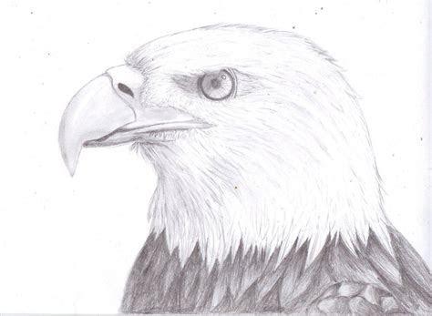 eagle drawings realistic eagle drawing bald eagle