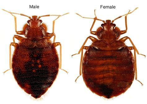 Bed Bug Inspection Group LLC   Brooklyn, NY 11211   Angies List