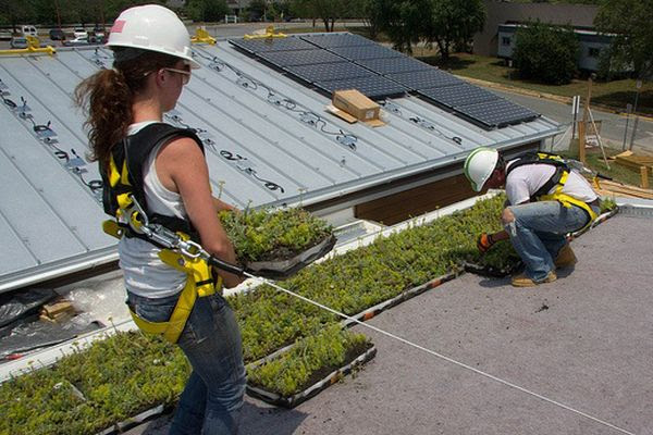 green roof 4