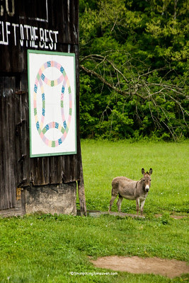 Donkey by Mail Pouch Barn, Carter County, Kentucky