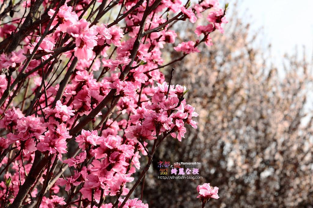 2013-04-05-13h54m05IMG_2590