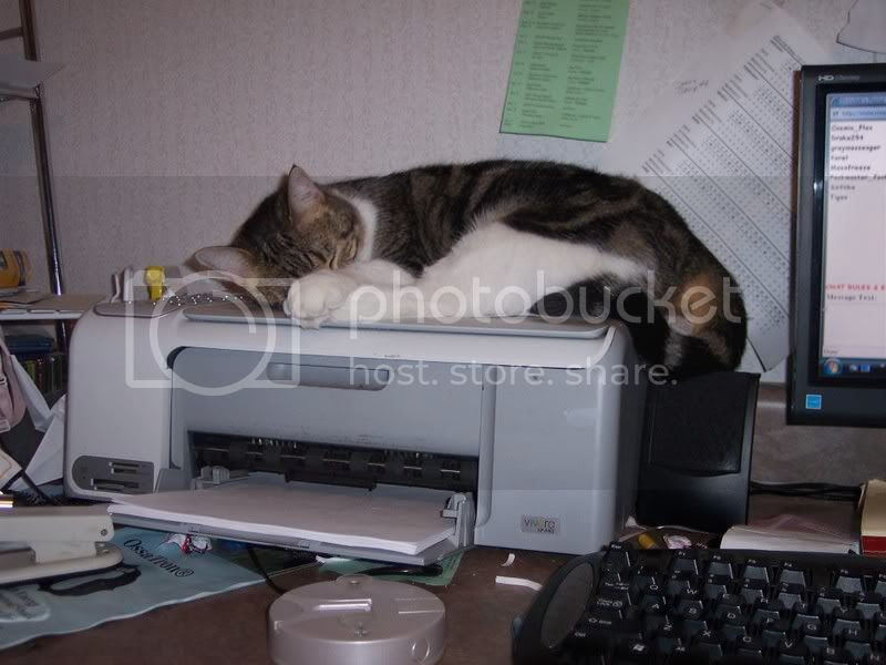printer cozy, autumn the cat asleep on the scanner-printer