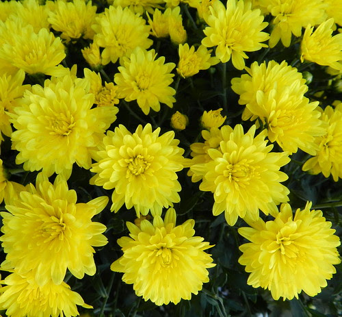 todayflowersDSCN2135