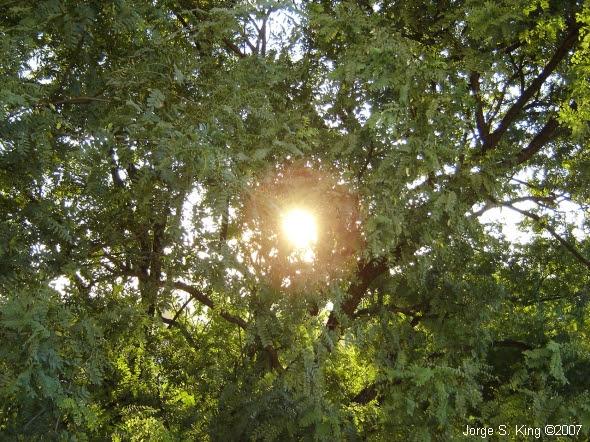 Sol al final del verano