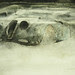無題(車).木炭、水彩、紙本.56x36cm.2011