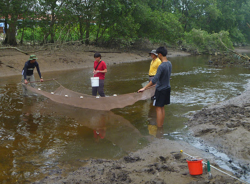 Mega Marine Survey: Seine netting Sungei Mandai Besar