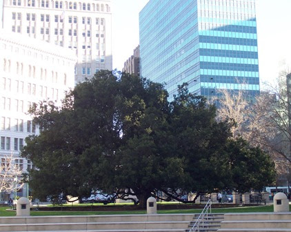 city hall oak