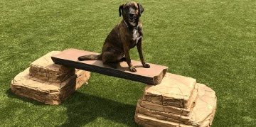 Gyms For Dogs: Natural Dog Park Products