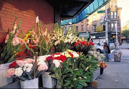 FlowerWatcher415px