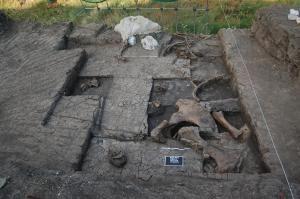 Ο άνθρωπος των Πετραλώνων που ανακάλυψε ο καθ. Πουλιανός ίσως έτρωγε από αυτούς τους ελέφαντες.