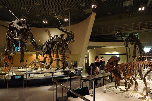 The Tyrannosaurus Rex and other dinosaur skeletons