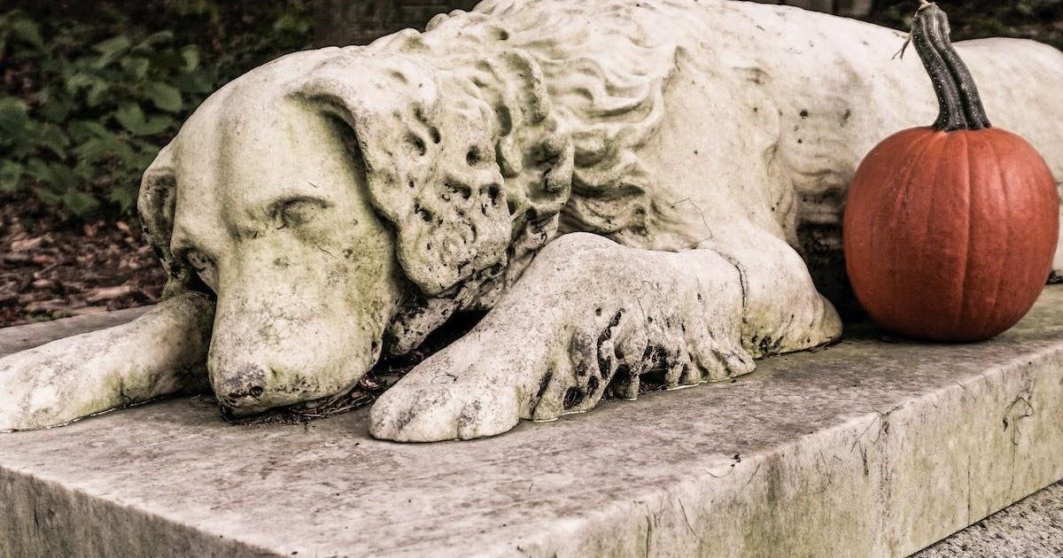Can I Bury My Pet In The Backyard - PetsWall