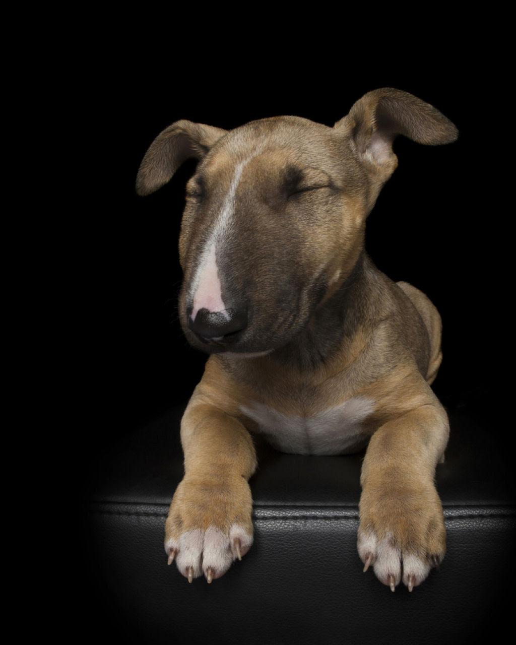 Estas fotos de cães bem Zen farão com que você se sinta Zen também 09