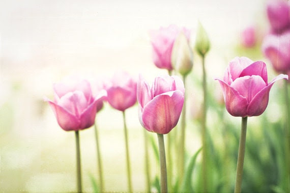 """Flower Photography - shabby chic wall art tulips pink green flower photo cottage chic decor white - 8x12 Photograph, """"To Walk in Beauty"""" - CarolynCochrane"""