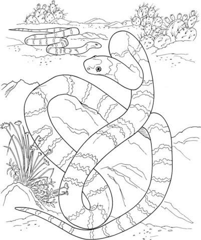 Dibujo De Una Larga Serpiente En El Desierto Para Colorear Dibujos