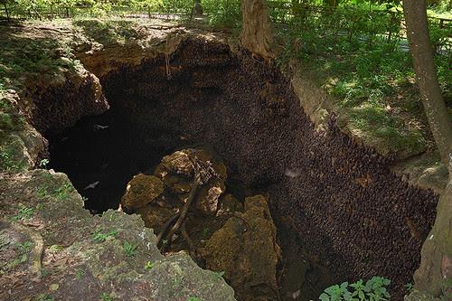 Monfort Cave Entrance 3
