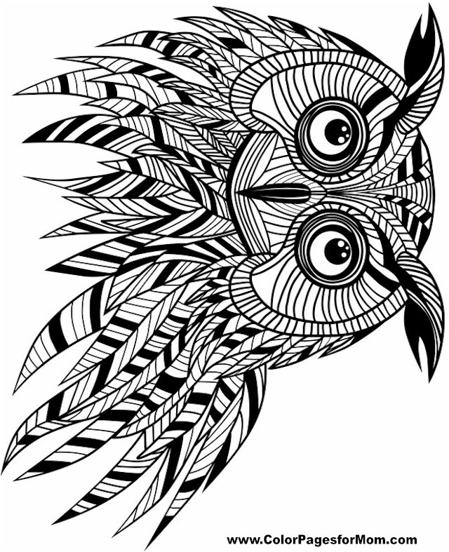 Free Printable Adult Coloring Pages - Owl Coloring Pages