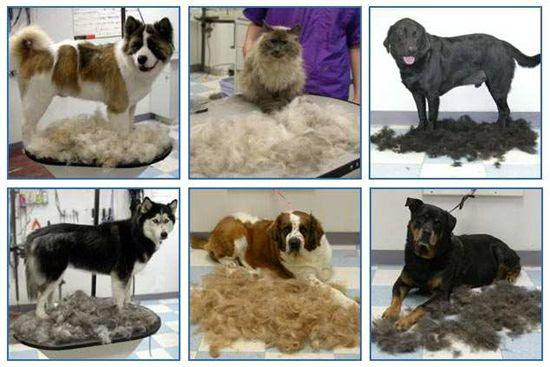 Top 10 Dog Grooming Tips to Keep Shedding Under Control ...