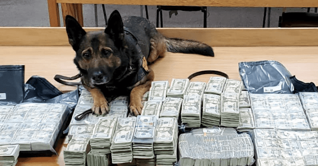 California K9s Discover Illegal Drugs And Money During The Holidays