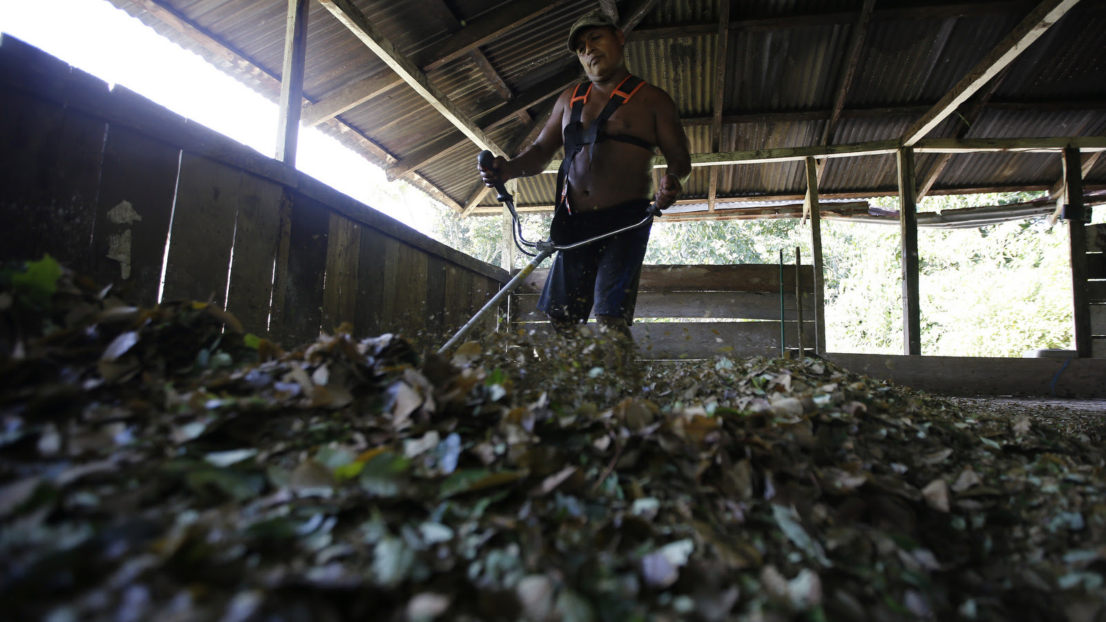 A man mulches coca leaves with a weed eater at a small makeshift lab in Puerto Bello, Colombia. Coca cultivation surged last year and now covers more territory than it did when a multibillion U.S.-led eradication campaign began 16 years ago (AP/Fernando Vergara)