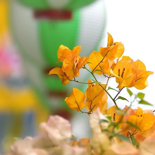 http://farm4.static.flickr.com/3106/2597171315_7653efeb00.jpg