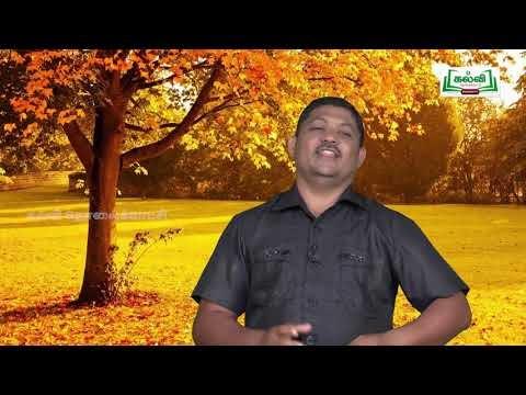 முப்பரிமாணம் Std 12TM Bio Botany தாவர திசு வளர்ப்பு Part 03 Kalvi TV