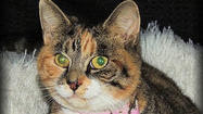 Adoptable Animals December 26, 2014 [Pictures]