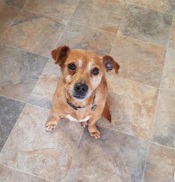 Rita – 7 year old female Terrier