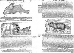 Páginas del 'Dioscórides de Laguna'