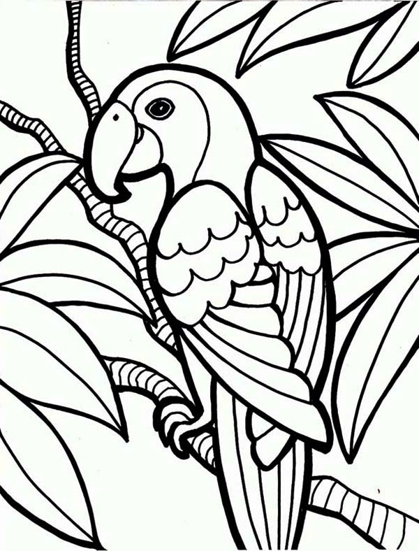 Jungle Coloring Pages 3 Coloring Kids - Coloring Pages
