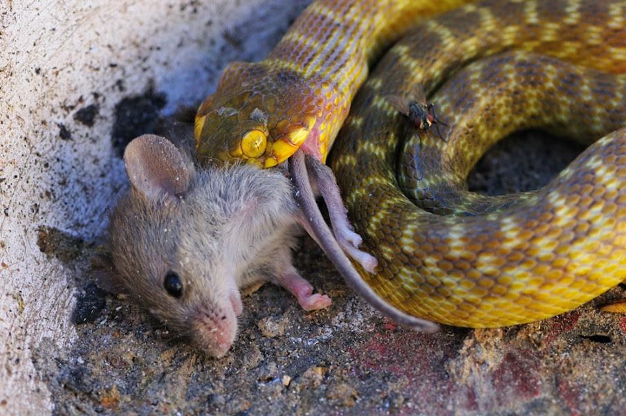 Resultado de imagem para snake eat