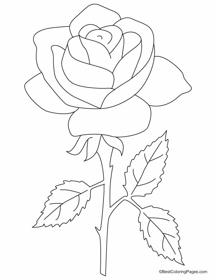 A beautiful rose with three petals coloring pages
