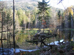 Adirondack Vacation - 10/08 - Owens & Copperas Ponds Hike