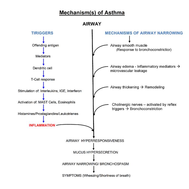 Asthma Nursing Care Plan & Management - RNpedia